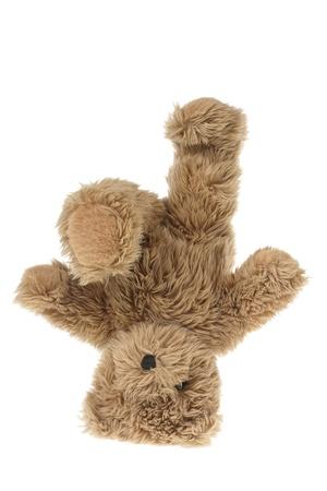 oso de peluche: Osito de peluche en el fondo blanco
