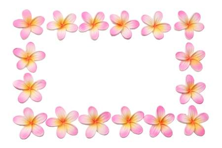 Frangipani on white Background photo