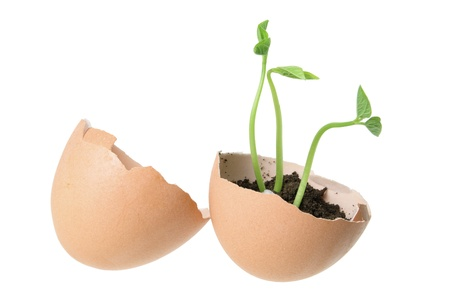 Young Plants in Egg Shells on White Background Stock Photo - 14214371