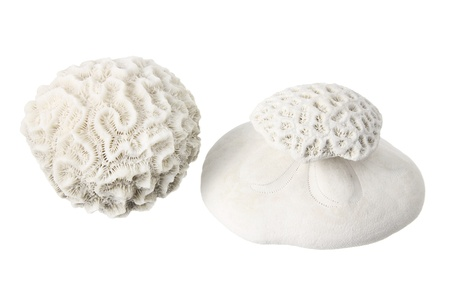 Corals on White Background Stock Photo - 14598745