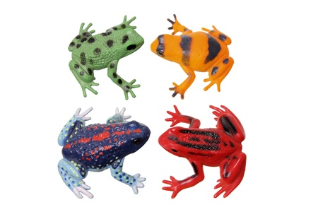 Frogs on White Background photo