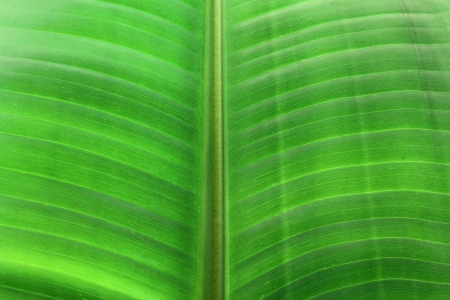 Close Up of Palm Leaf Stock Photo - 16122800