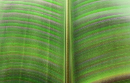 Close Up of Palm Leaf Stock Photo - 16123092