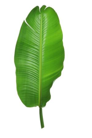 Palm Leaf on White Background Stock Photo - 16662444