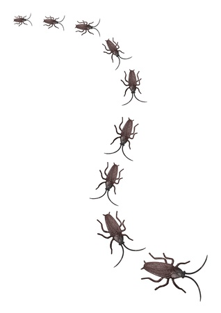 revolting: Toy Cockroaches on White Background