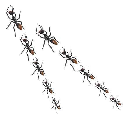 Toy Ants on White Background photo