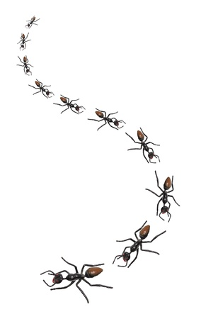 Toy Ants on White Background photo