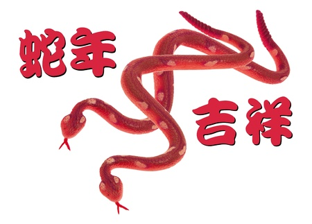 Year of the Snake on White Background photo