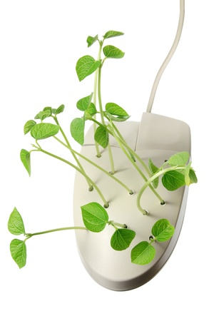 Computer Mouse with Sprouts on White Background Stock Photo - 17188769
