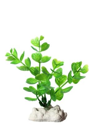 tropical acquarium: Plastic Seaweed on White Background