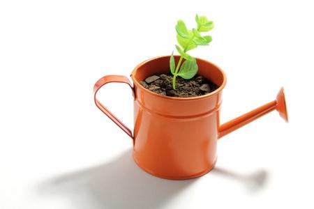 conservacion del agua: Planta joven en la regadera sobre fondo blanco