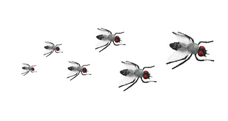 Toy Flies on White Background photo