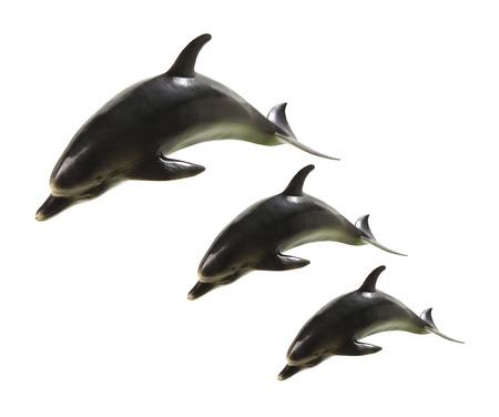 witte achtergrond: Dolfijnen op een witte achtergrond