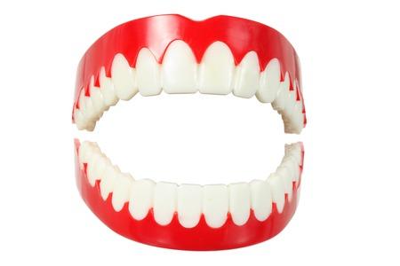 molares: Dentadura en el fondo blanco Foto de archivo