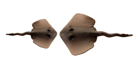 Stingrays on White Background Stock Photo