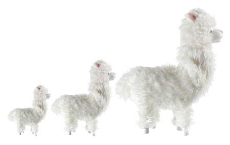 Llama on White Background