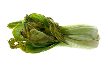 Decayed Chinese Cabbage on White Background