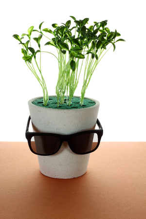 Potplant with Sunglasses on Wooden Background Stock Photo