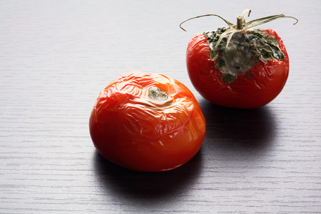 나무 배경에 썩은 토마토 스톡 콘텐츠