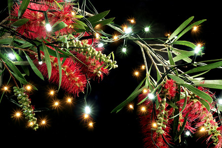 Bottlebrush Flowers and Fairy Lights on Black Background Stock Photo