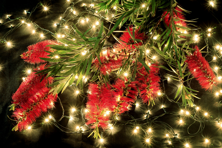 Bottlebrush Flowers and Fairy Lights on Black Background 스톡 콘텐츠
