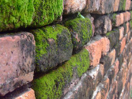 liquen: musgos sobre fondo rojo muro de anceint