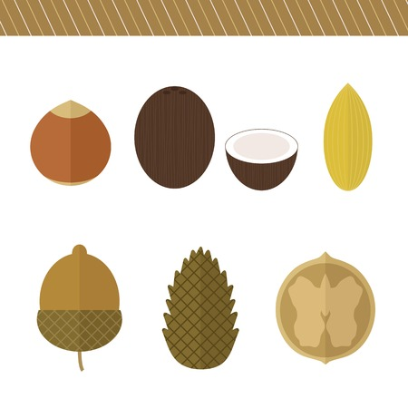 Set of nuts in flat style. Vector isolated elements for design. Hazelnut, pine nuts, coconut, acorn, walnut, almond Illustration