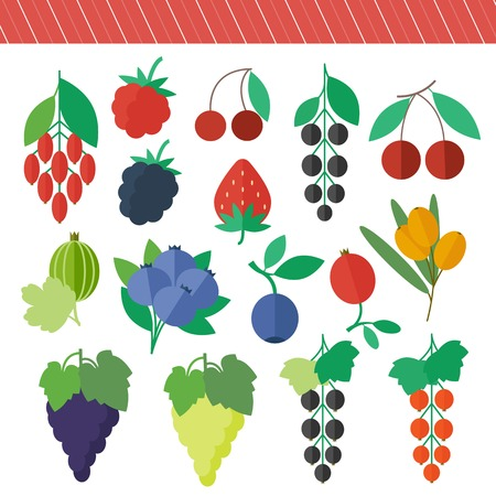 Berries set of vector isolated elements for web design in flat style