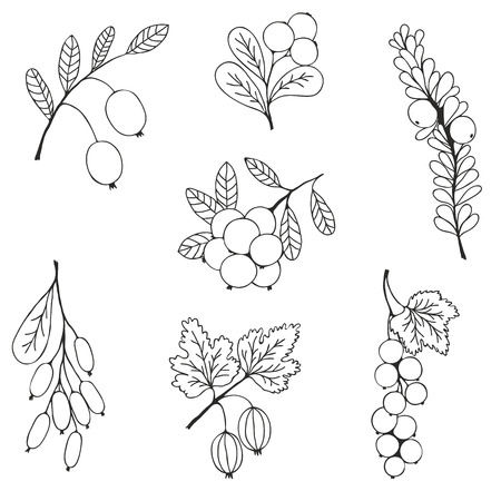 cranberry illustration: Natural berries sketch seamless pattern. Silhouettes of blueberry, currant, cranberry on a white background. Vector illustration Illustration