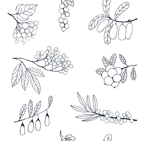 honeysuckle: Silhouettes of sea buckthorn, currant, blueberry, honeysuckle on a white background
