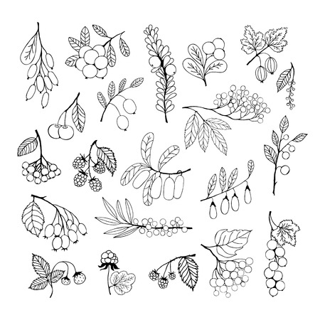 Collection of garden and wild berries. Black silhouettes isolated on white background. Vector elementes for design