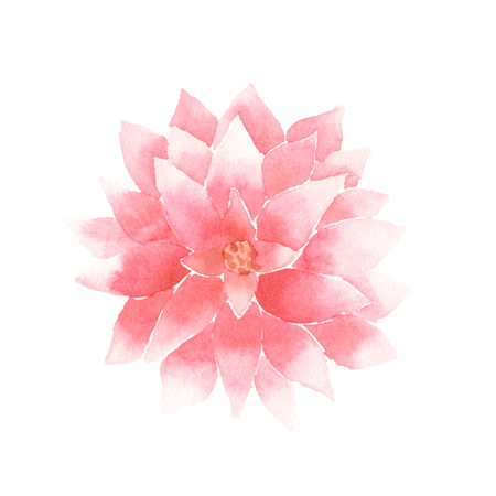 flores chinas: Acuarela flor de loto de color rosa.