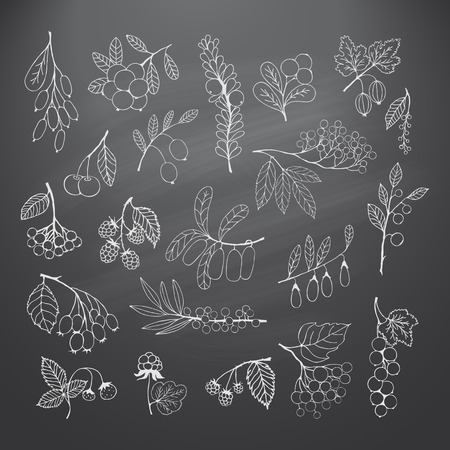 chokeberry: Collection of garden and wild berries. Illustration