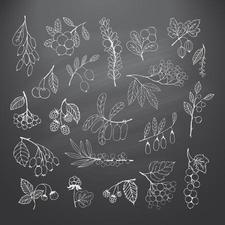 honeysuckle: Collection of garden and wild berries. Illustration