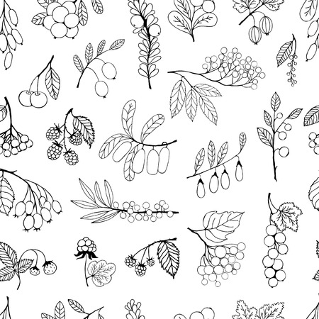 aronia: Seamless black and white background. Garden and wild berries. Vector background