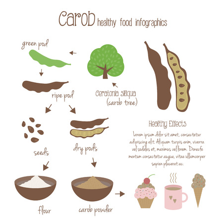 decaf: Carob infographics. Production of carob, use in cooking. Tree, pods, seeds and carob powder. Vegetarian decaffeinated food. illustration