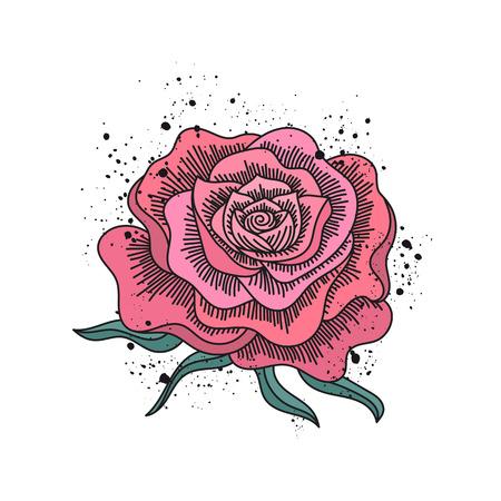 Red rose hand drawn illustration isolated. Folk art style. Ink black splash. Vector illustration. Illustration