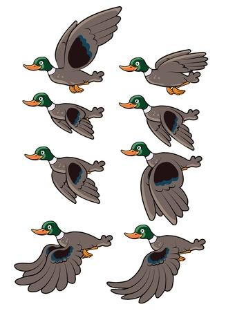 mallard: Flying Bird Animation