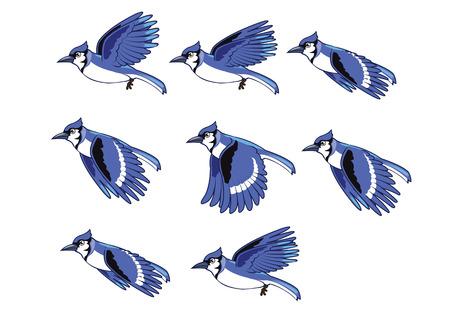 Blue Jay Bird Flying Animation  Çizim