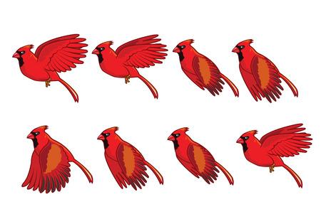 bird fly: Cardinal Bird Flying Animation  Illustration