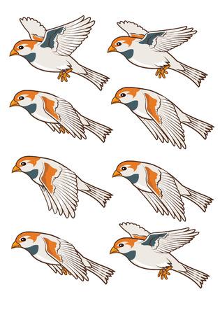 Sparrow Flying   Illustration