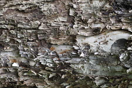 fissures: Beautiful wood texture , natural background image Stock Photo