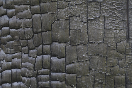 burnt wood texture background close up photo
