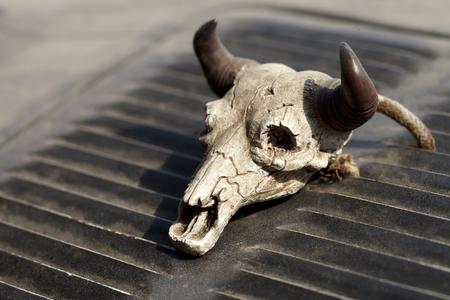 角を持つ小さなヴィンテージ装飾的な頭蓋骨