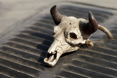 a small vintage decorative skull with horns Banco de Imagens