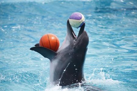 delfin: A słodkie delfiny podczas przemówienia w delfinarium