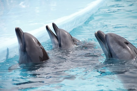 dolphinarium: a cute dolphins during a speech at the dolphinarium