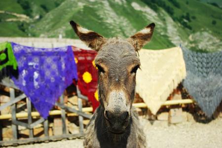 baby ass: mountain ass close-up on a background of mountainous terrain