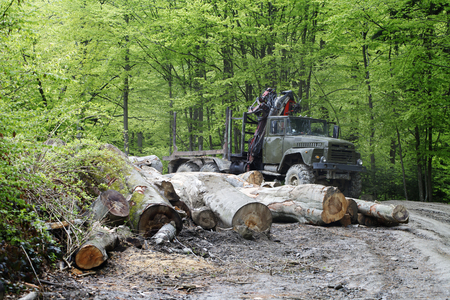 felling: a trees   logging , felling of trees  , the lumber industry