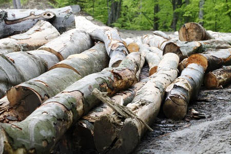 logging: a trees   logging , felling of trees  , the lumber industry